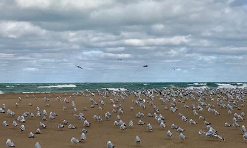 Gullsat Beach 500